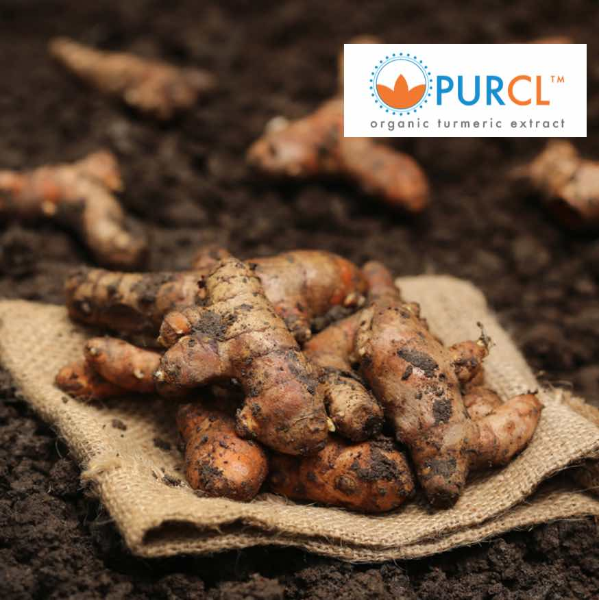 PurCL™ Organic Turmeric Extract