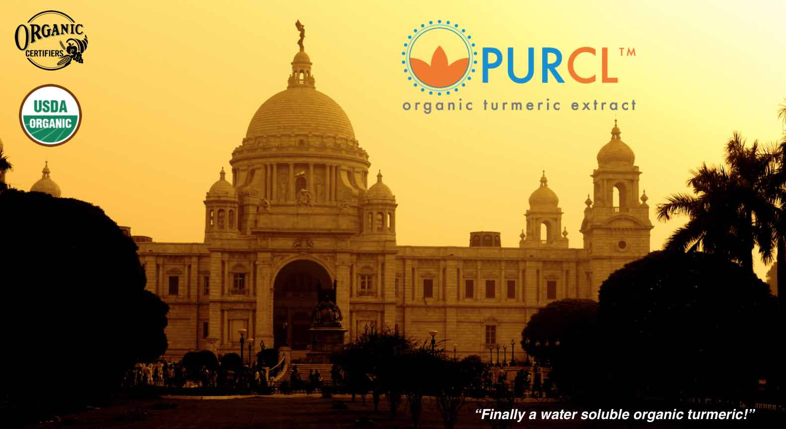 Organic Turmeric Extract Supplier PurCL